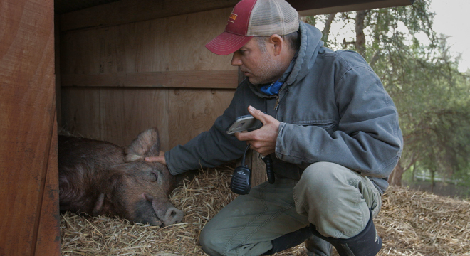 The Biggest Little Farm - Rural Aid Fire Relief Fundraiser